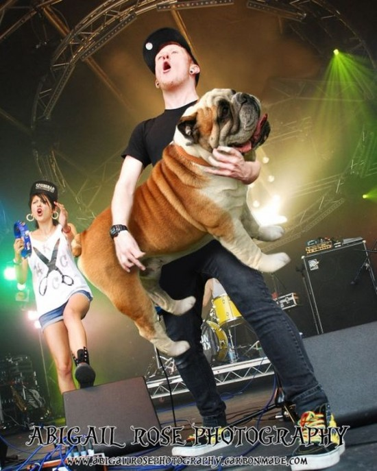 Bass-Guitars-Replaced-by-Dogs-025