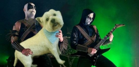 Bass-Guitars-Replaced-by-Dogs-028