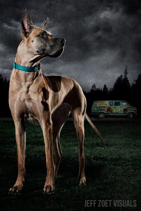 Scooby-Doo-In-Zombie-Hunter-001
