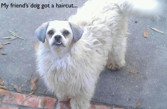 dog-got-a-haircut