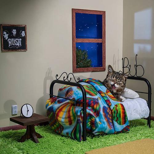 kitty-room