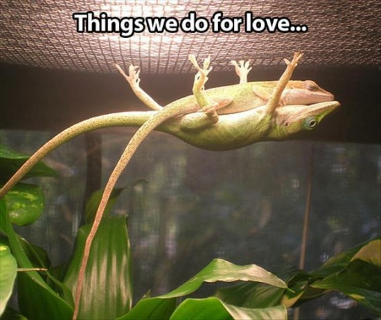 things-we-do-for-love