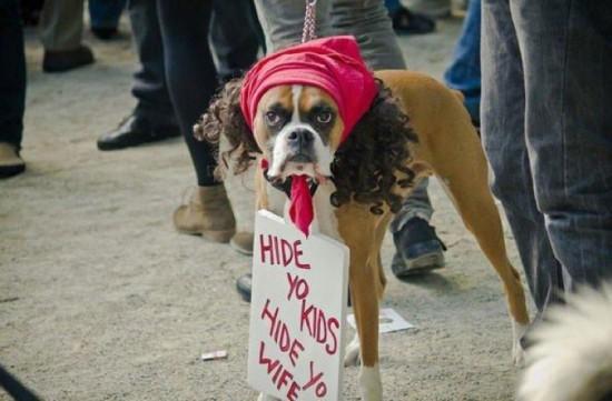 20-Funniest-Dog-Halloween-Costumes-003