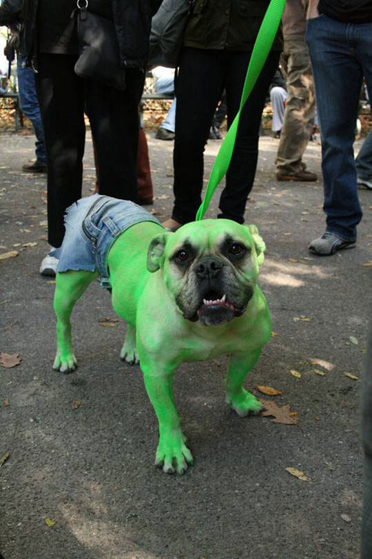 20-Funniest-Dog-Halloween-Costumes-004
