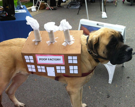20-Funniest-Dog-Halloween-Costumes-007