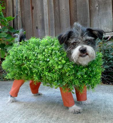 20-Funniest-Dog-Halloween-Costumes-008