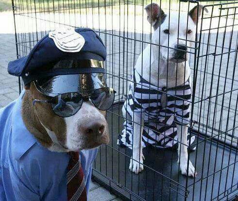 20-Funniest-Dog-Halloween-Costumes-010