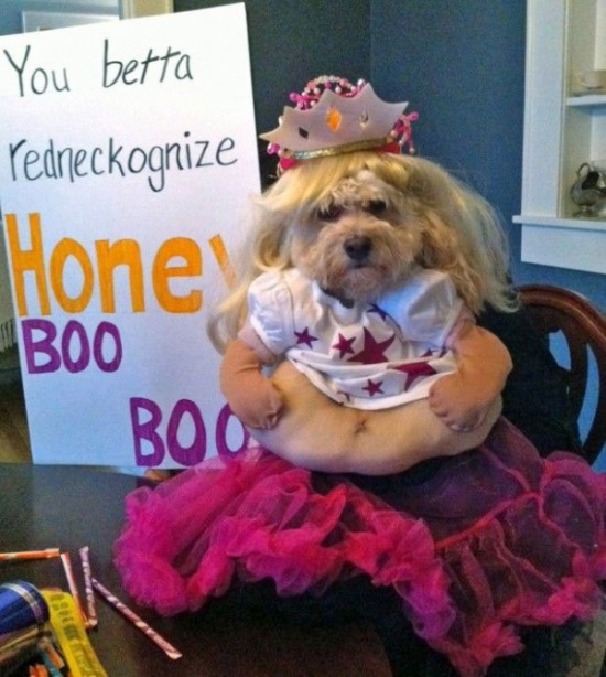 20-Funniest-Dog-Halloween-Costumes-011
