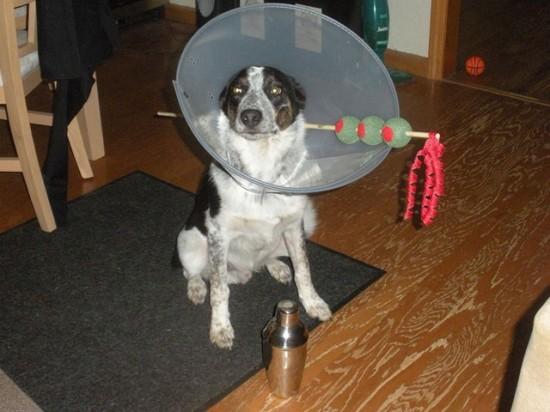 20-Funniest-Dog-Halloween-Costumes-012