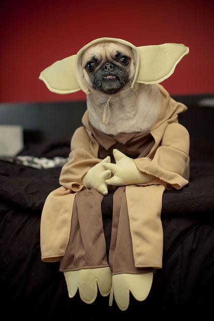 20-Funniest-Dog-Halloween-Costumes-013