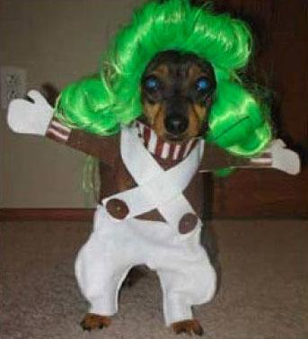 20-Funniest-Dog-Halloween-Costumes-015
