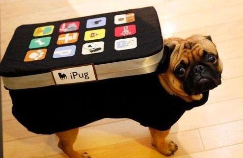 20-Funniest-Dog-Halloween-Costumes-017