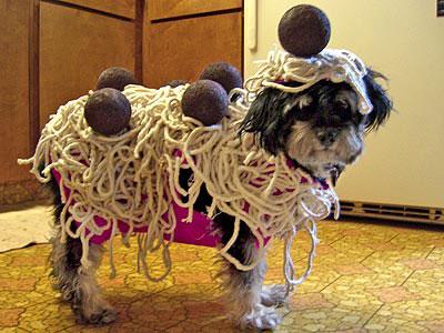 20-Funniest-Dog-Halloween-Costumes-020