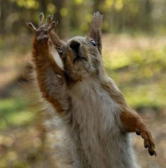 13 Cute Animals Saying Hi To You