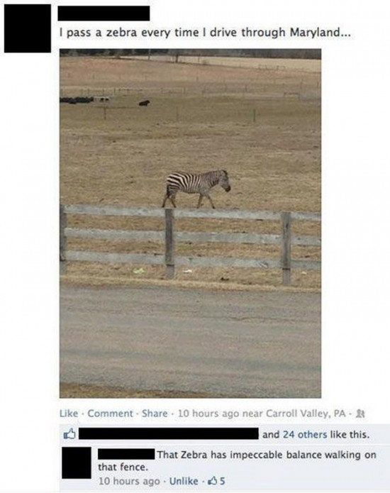 Funny-Facebook-Comments-009