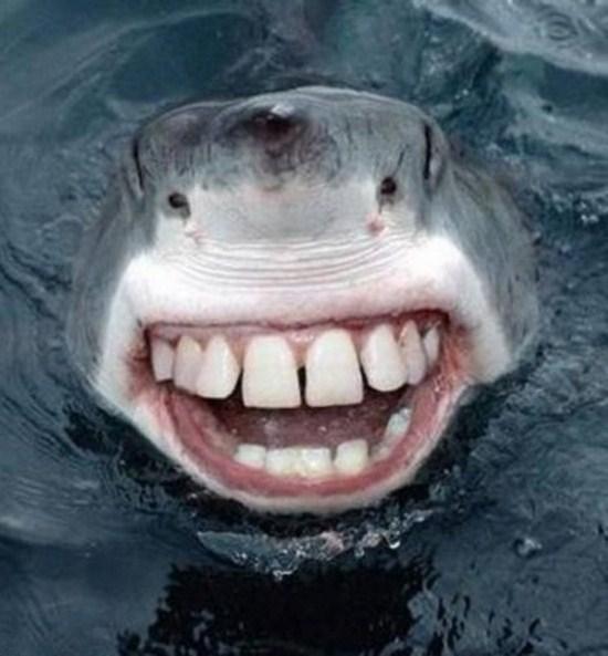 Sharks With Human Teeth (15 Photos)