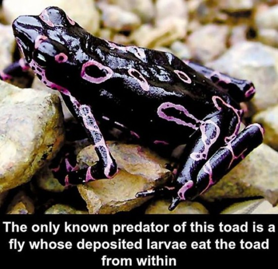 30 Awesome Scientific Facts 013