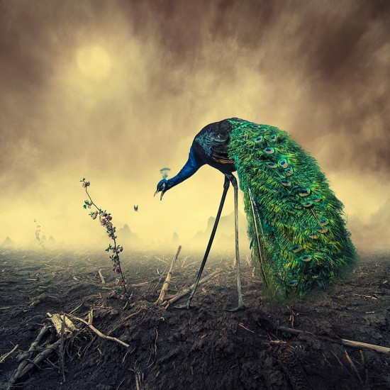 Surreal-Photo-Manipulations-By-Caras-Ionut-014