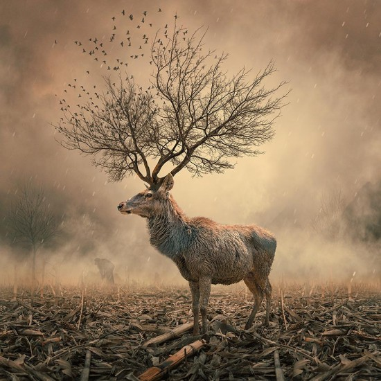 Surreal-Photo-Manipulations-By-Caras-Ionut-015