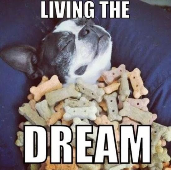Dream Come True 007