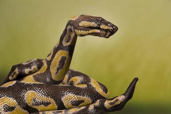 Snake arm art