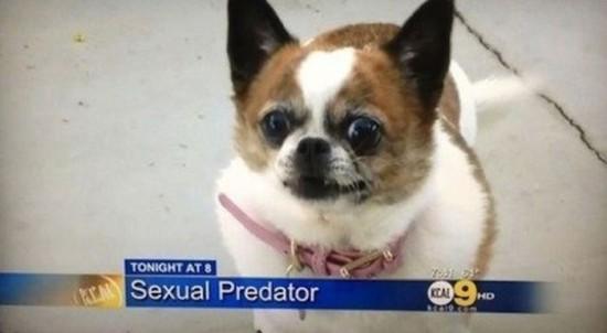 Weird Local News Captions 028
