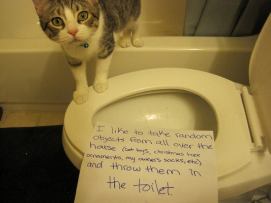Funny Confessions Of Naughty Cats 001