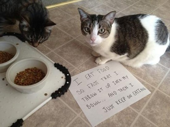 Funny Confessions Of Naughty Cats 002