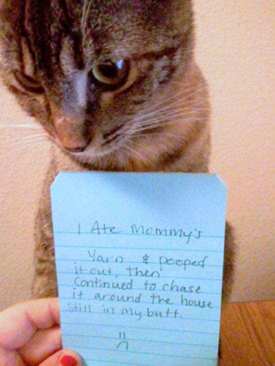 Funny Confessions Of Naughty Cats 004