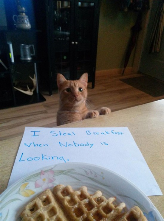 Funny Confessions Of Naughty Cats 007