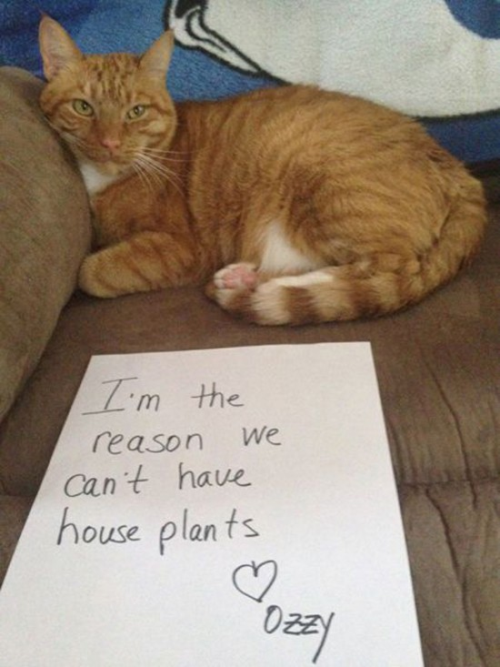 Funny Confessions Of Naughty Cats 008