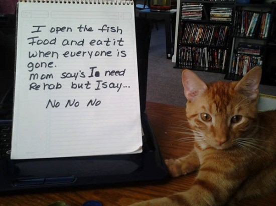 Funny Confessions Of Naughty Cats 010