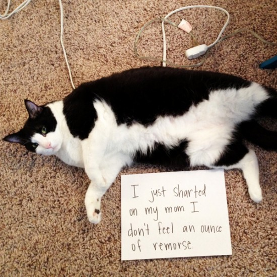Funny Confessions Of Naughty Cats 012