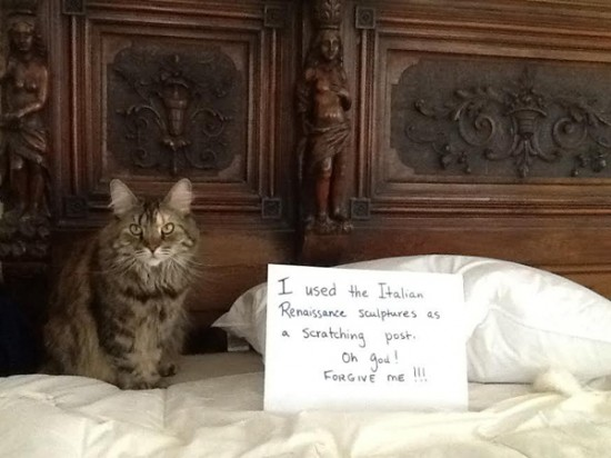 Funny Confessions Of Naughty Cats 013