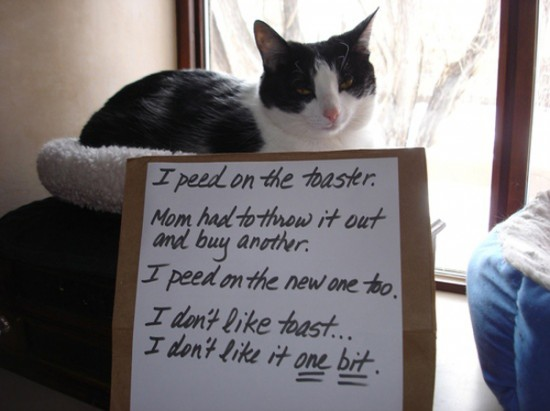 Funny Confessions Of Naughty Cats 014