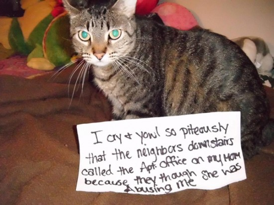 Funny Confessions Of Naughty Cats 015
