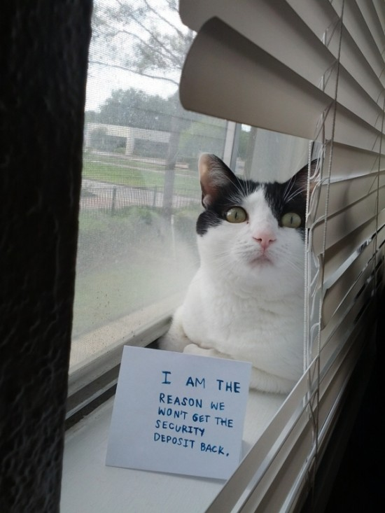 Funny Confessions Of Naughty Cats 016