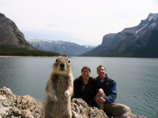 18 Animals That Are Much Better At Photobombing Than Humans 005