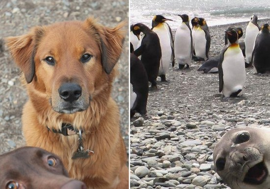 18 Animals That Are Much Better At Photobombing Than Humans 011