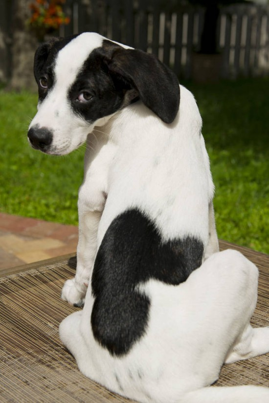 20 Adorable Animals With Unique Mark On Their Body 005