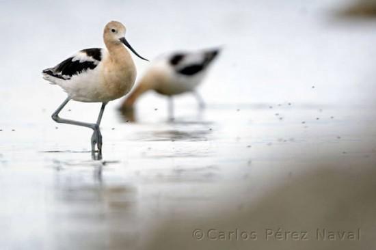 9-year-old Carlos Pérez Naval is an Amazing Photographer 010