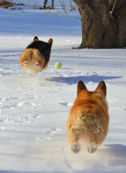 perfectly timed pics 06